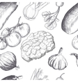 Hand drawn seamless set of organic vegetables vector image