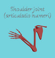 human organ icon in flat style shoulder joint vector image