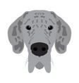 isolated great dane avatar vector image vector image