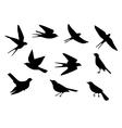 birds pattern vector image vector image