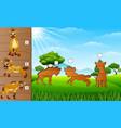 cartoon hyena collection set find the correct sha vector image vector image