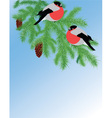 fur tree branch and bullfinches vector image