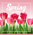 pink tulips on background pink vector image