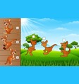 cartoon kangaroos collection set find the correct vector image vector image