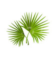 jungle leaves realistic monstera branches with vector image vector image