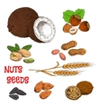 Nuts seeds beans and cereal sketch symbol vector image vector image