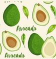 seamless pattern with avocado fruit vector image
