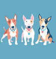 set bull terier dog vector image
