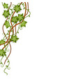 tropical vine or liana from jungle with empty vector image vector image