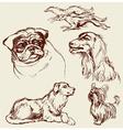 Set of Dogs - Labrador retriever hound pug setter vector image