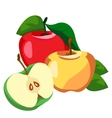 Apple whole and pieces vector image vector image