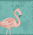 FlamingoAkva2 vector image vector image