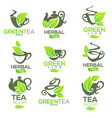 greenherbal organic tea logo template design vector image