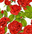 Luxury seamless pattern of red roses on a white vector image
