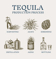 tequila production process glass bottle shot vector image vector image
