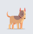 bull terrier cute dog icon furry human friend home vector image vector image