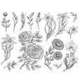 flowers set roses with leaves and buds herb vector image