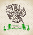 Hand drawn sketch tropical plants vintage vector image