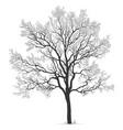 oak tree silhouette vector image vector image