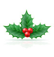 christmas holly berries stock vector image