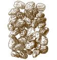 engraving raisins vector image vector image