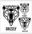 grizzly black bear white bear - animal heads vector image vector image