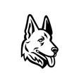 head a german shepherd or alsatian wolf dog vector image vector image