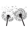 black silhouette dandelions vector image