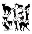 cute sphynx cat animal silhouettes vector image