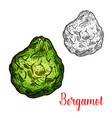 exotic fruit bergamot icon vector image vector image