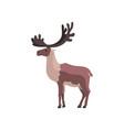 reindeer polar arctic animal vector image vector image