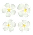 set real white plumeria flower vector image vector image