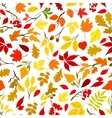 autumn leaves and berries seamless background vector image vector image