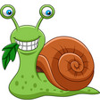 cartoon funny snail eating a leaf vector image vector image