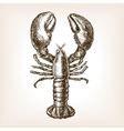 Lobster hand drawn sketch style vector image vector image