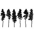 silhouettes tall pine trees cedar vector image vector image