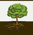 tree with roots and leafs image vector image
