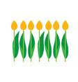 set tulips bouquet vector image