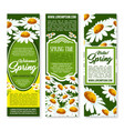 spring flower banner with daisy floral background vector image vector image