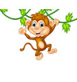 cute monkey hanging giving thumb up vector image