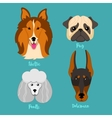 Different breeds of dogs vector image vector image