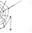 hand drawn spiderweb isolated on white background vector image