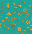 herbs and wild flowers botany pattern vector image