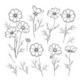 set linum flower elements collection flax vector image vector image