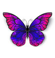 tricolored butterfly vector image