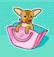 chihuahua dog in pink woman handbag vector image