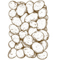 engraving potatoes pattern vector image