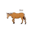 horse hand draw sketch vector image vector image