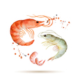 Watercolor shrimp vector image vector image