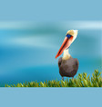 colorful pelican sitting in grass on ocean vector image vector image